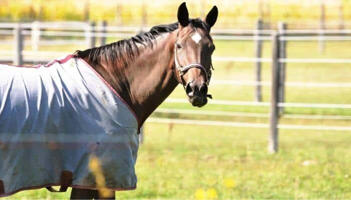 how to waterproof a horse blanket